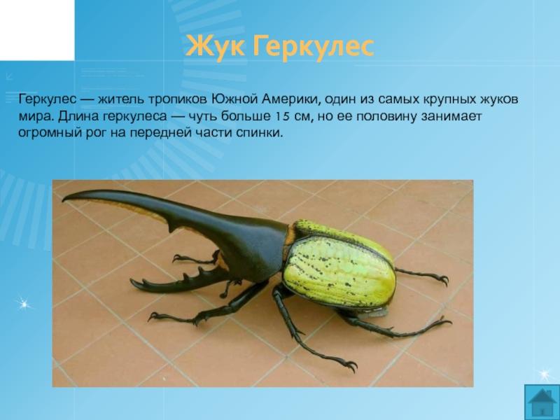 Особенности размножения и поведения жука геркулеса