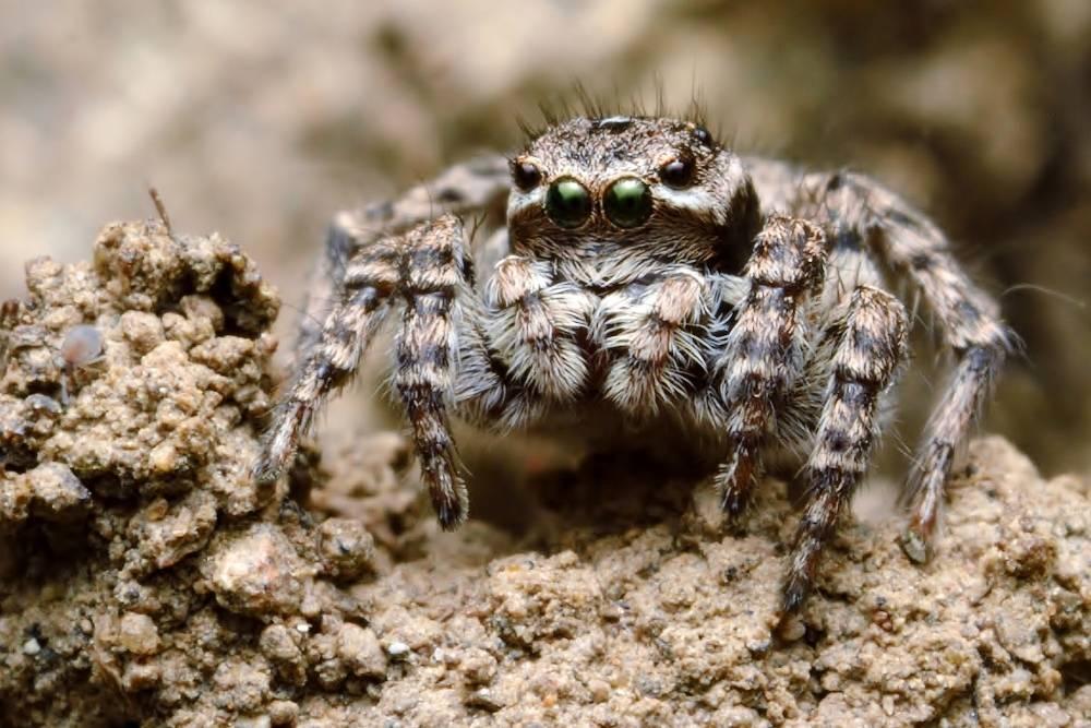 Как охотятся пауки? описание, фото и видео  - «как и почему»
