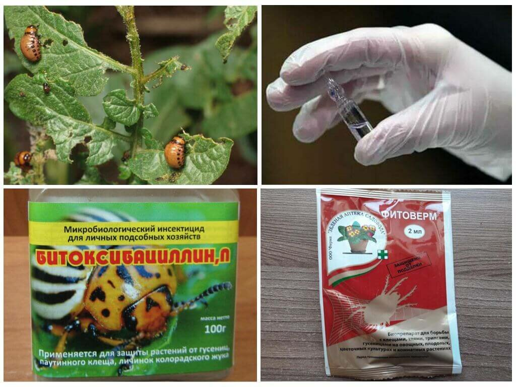20 способов борьбы с колорадским жуком