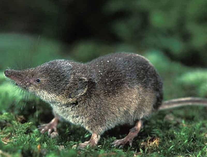 Мыши, роющие землю