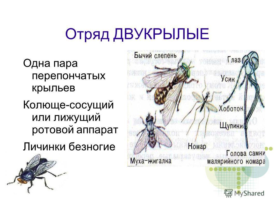 10 удивительных и интересных фактов про комнатных мух