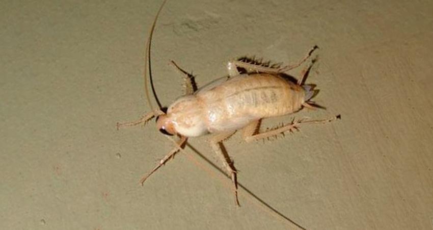 Основные причины появления тараканов в квартире