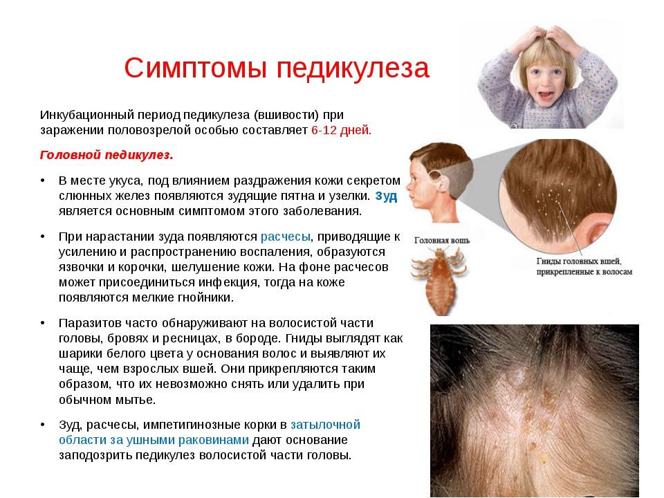 Педикулез. причины, симптомы и признаки, средства для лечения патологии, профилактика