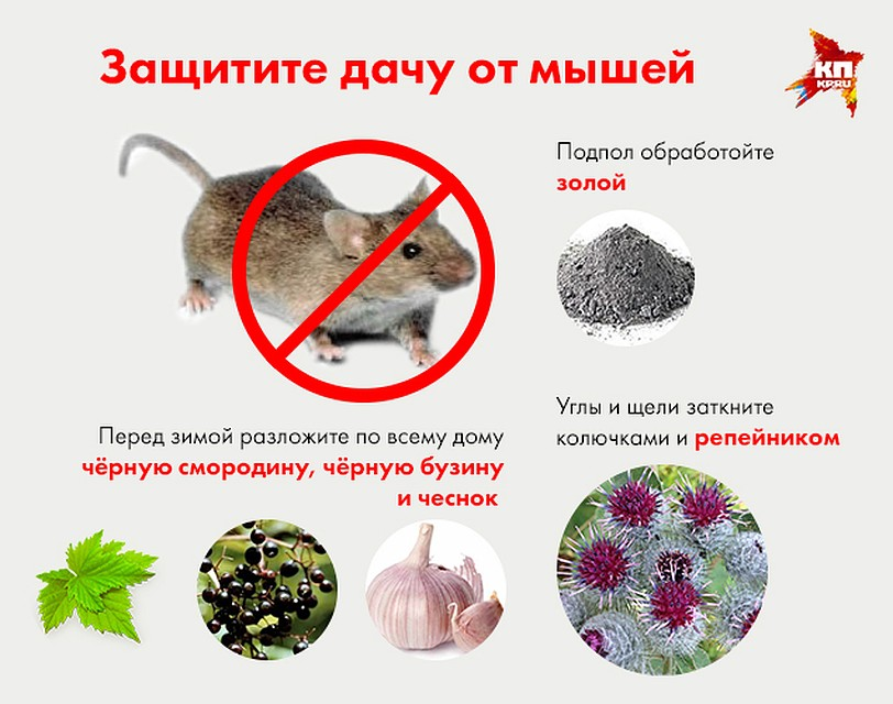 Как бороться с мышами, эффективные методы: народные и магазинные