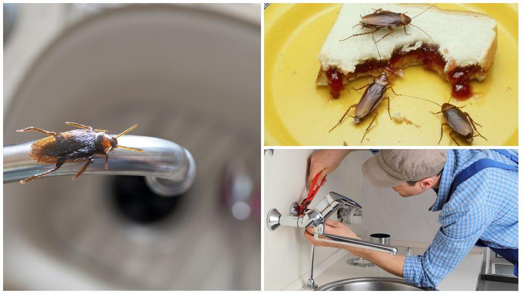 Как избавиться от тараканов в частном доме: средства и способы