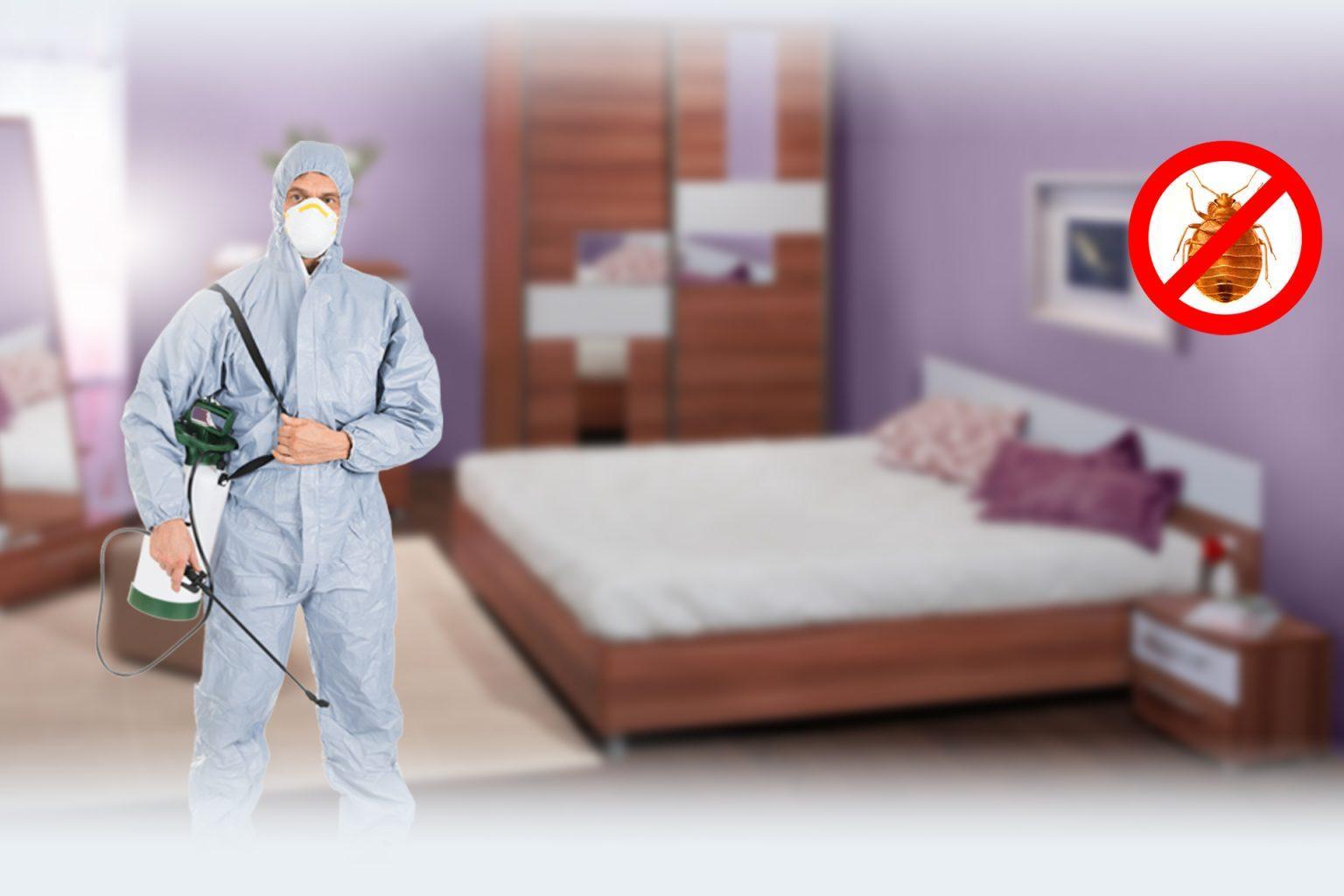 Что привлекает постельных клещей в жилые помещения и как с ними бороться