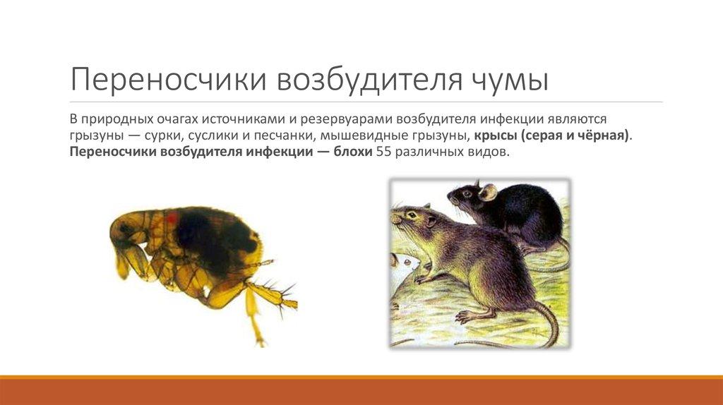 Как избавиться от летучих мышей: бешенство и другие болезни от укуса, прочий вред русский фермер