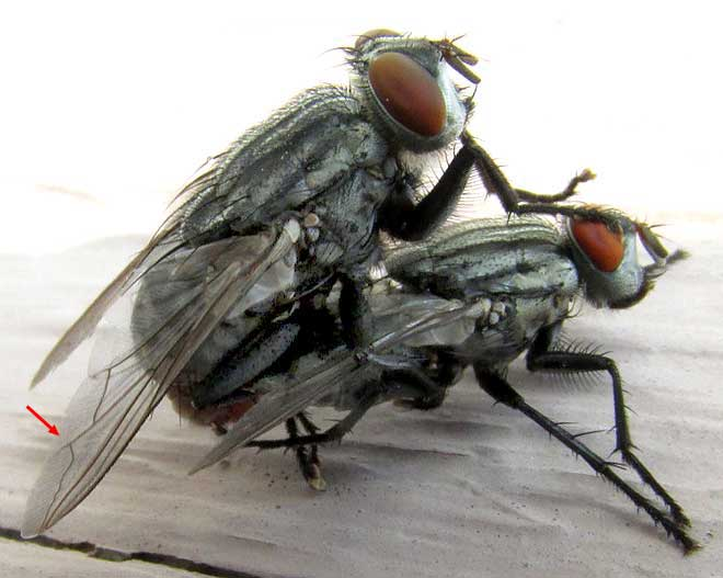 Почему комары кусают и почему их укусы чешутся? описание, фото и видео