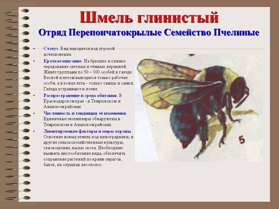 Кузнечик - 120 фото насекомого и особенности его жизненного цикла