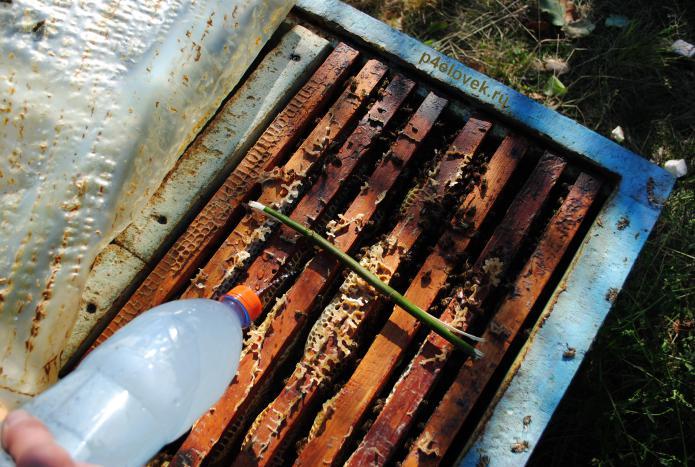 Осенняя обработка пчел бипином (видео)