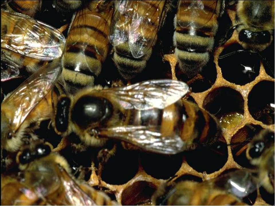 О борьбе с муравьями на пасеке, в ульях: как избавиться народными средствами