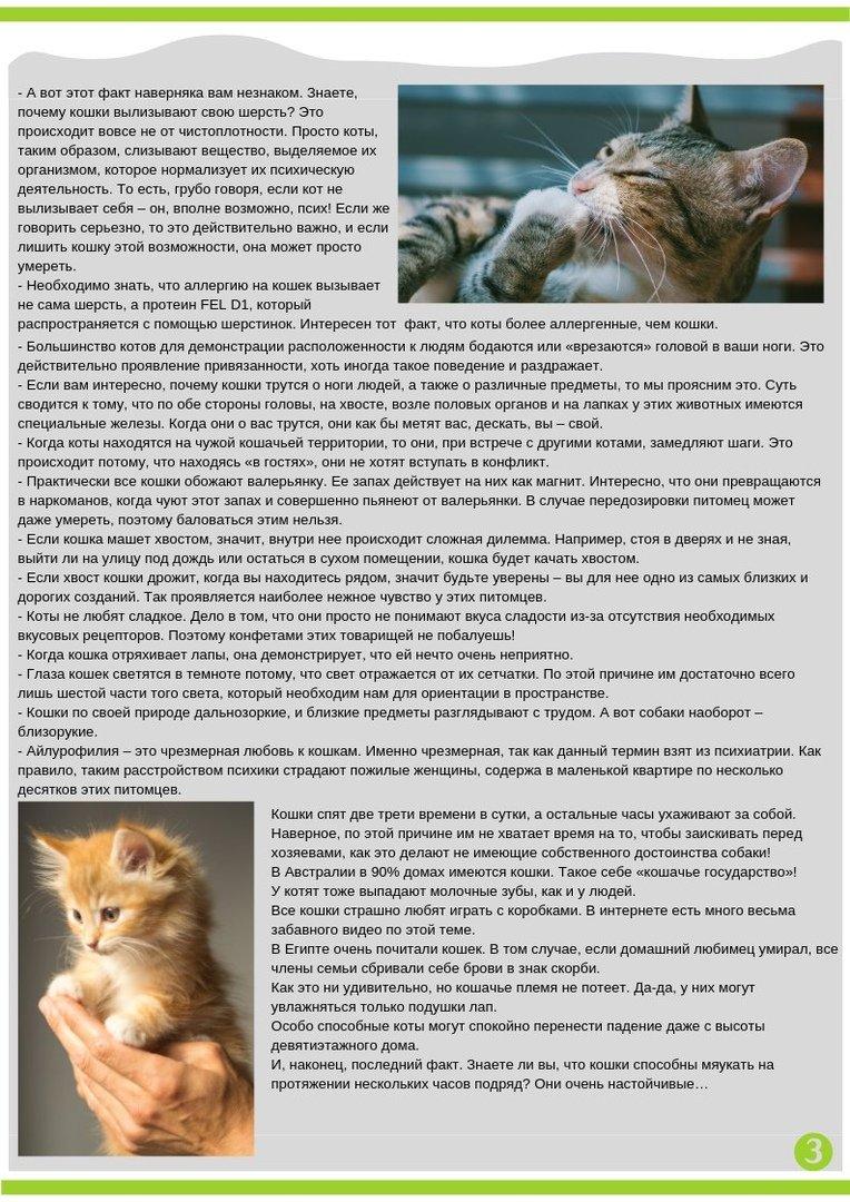 Что делать если кошка съела нитку?