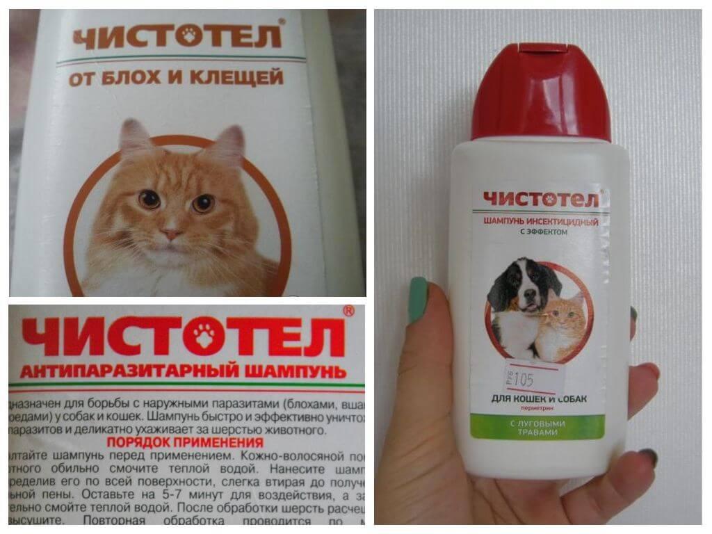 Чем помыть кошку: обычным шампунем, мылом или специальным средством для ухода