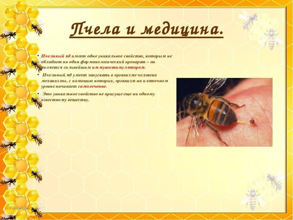 Укус пчелы: симптомы, последствия, лечение и польза