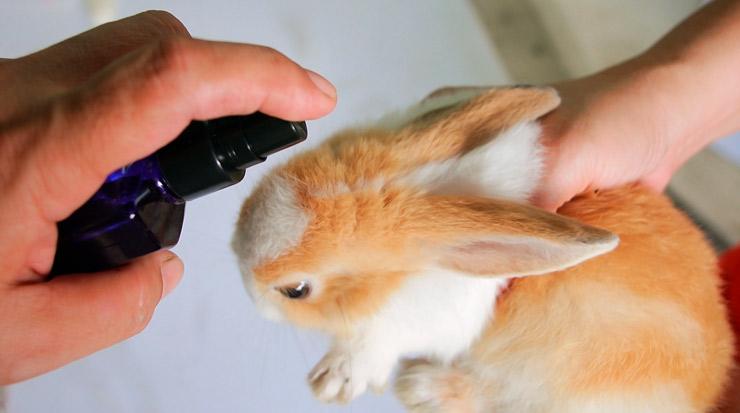 Бывают ли блохи у кролика, как их вывести: срадства, капли, народные средства