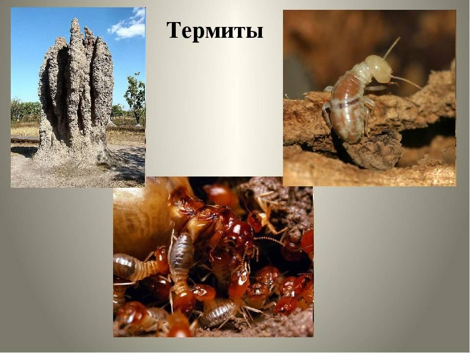 18 интересных фактов о термитах