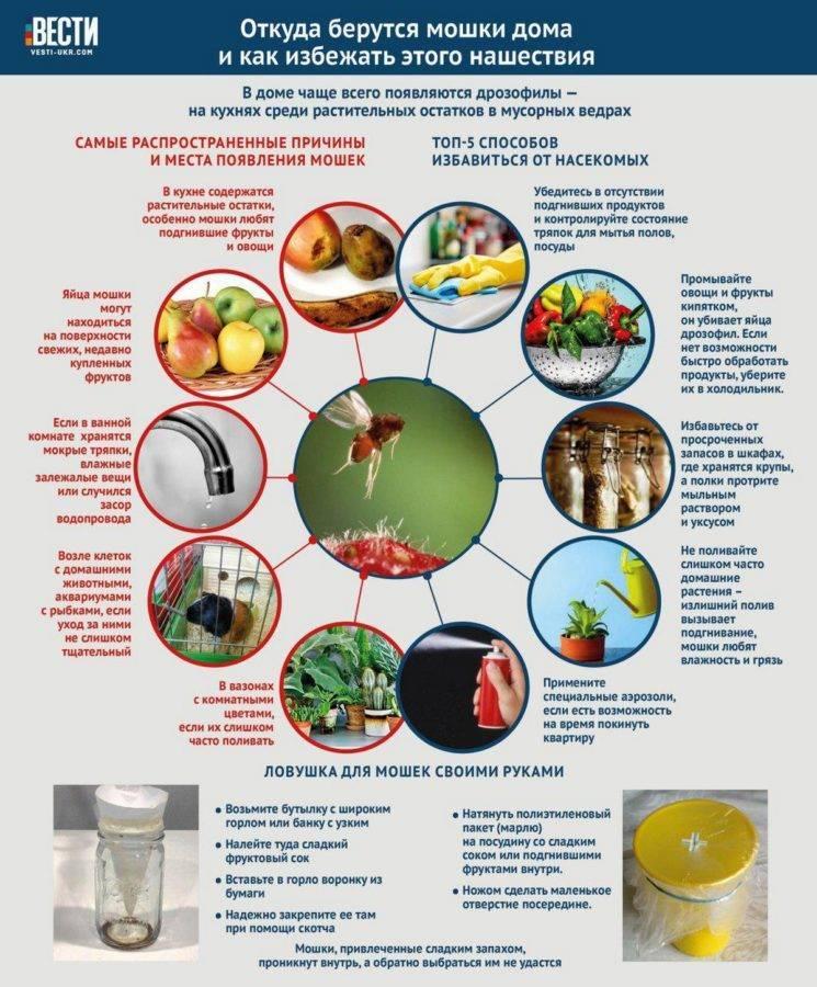 Как избавиться от дрозофил на кухне