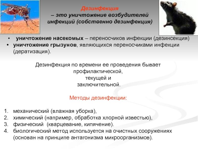 Дератизация помещений в санкт-петербурге. борьба с грызунами до полного уничтожения