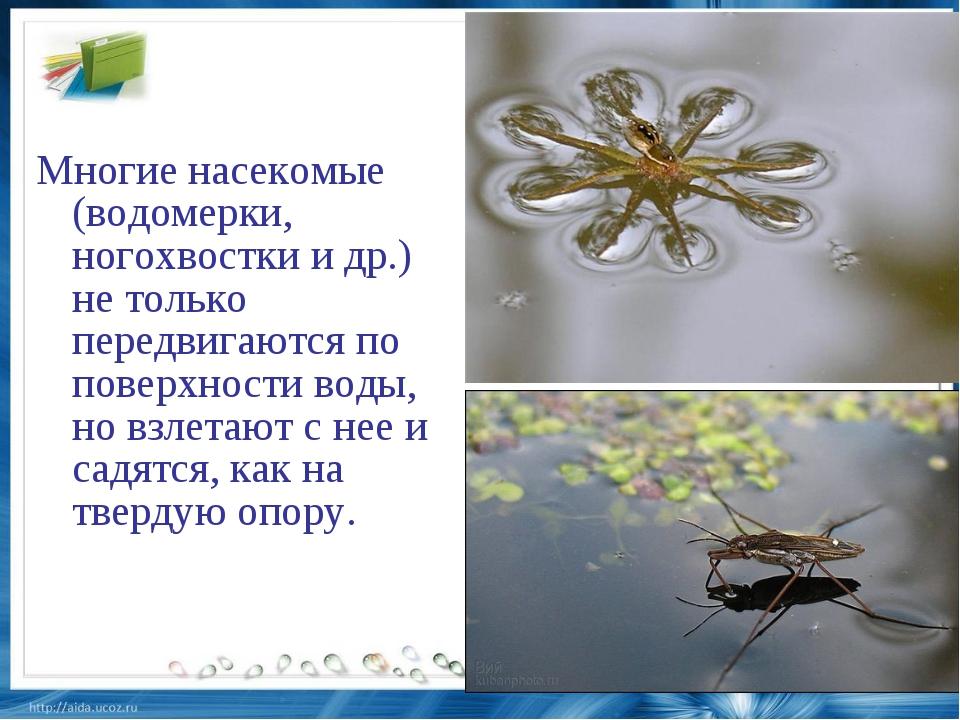 Особенности и разновидности водяных клопов: водомерки, гладыши и другие водолазы