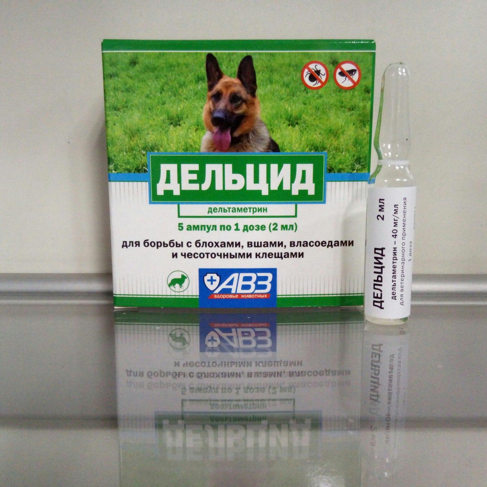 Бутокс для собак: показания к применению и способы применения