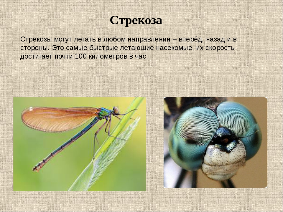 Костянка многоножка – особенности питания, размножения