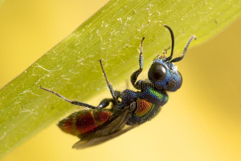 Земляные осы — особенности биологии и как можно избавиться от этих насекомых