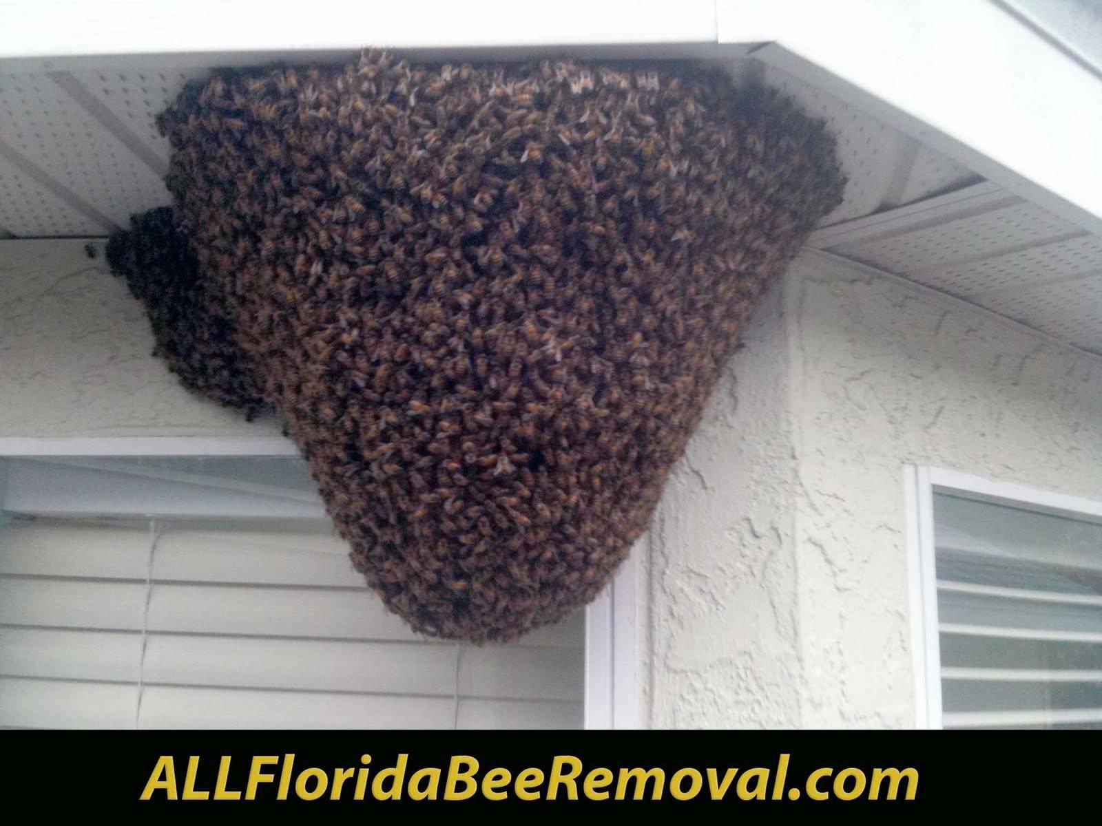Как можно избавиться от пчел в стене деревянного дома, как вывести из под крыши