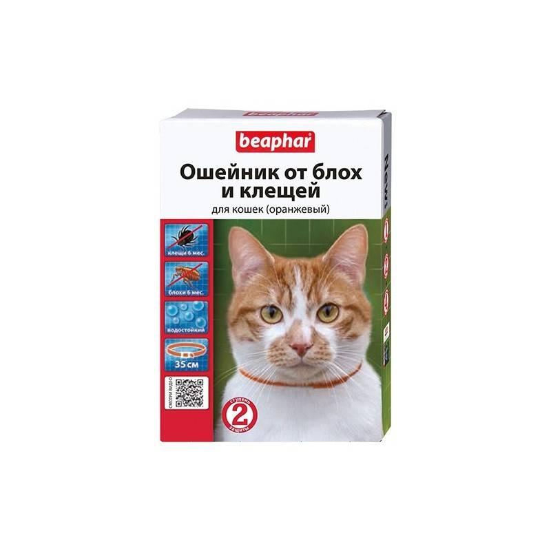 Ошейник от блох для кошек: виды, как действует, отзывы владельцев