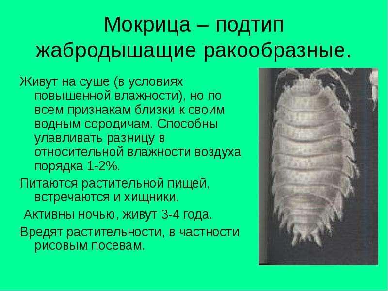 Виды мокриц: морская, броненосец обыкновенная, сороконожка, чешуйница, двухвостка и другие, что делать, если они завелись в квартире русский фермер