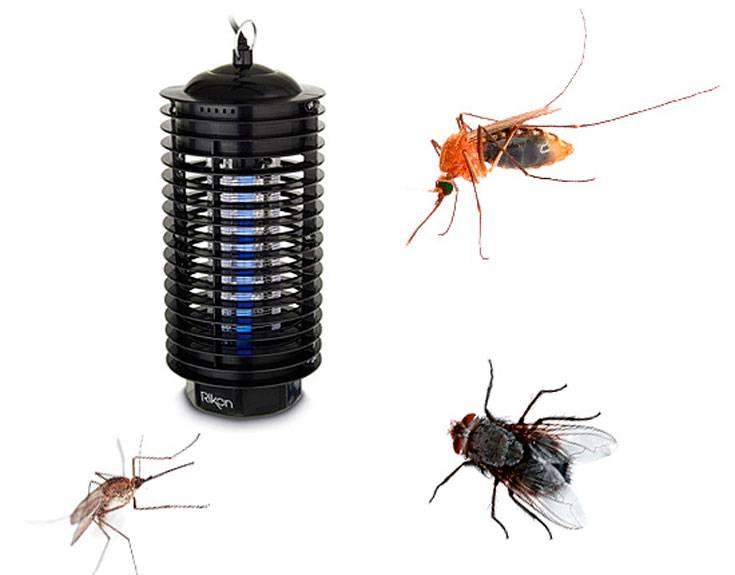 Как избавиться от мух во дворе быстро и эффективно