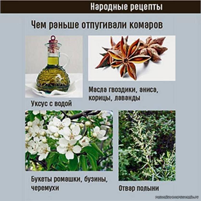Против комаров, мух, моли и муравьев: травы и цветы для дома, которые помогут избавиться от насекомых