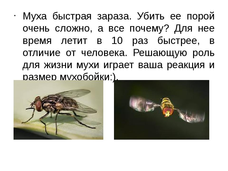 Описание мухи, строение и скорость движения в полете