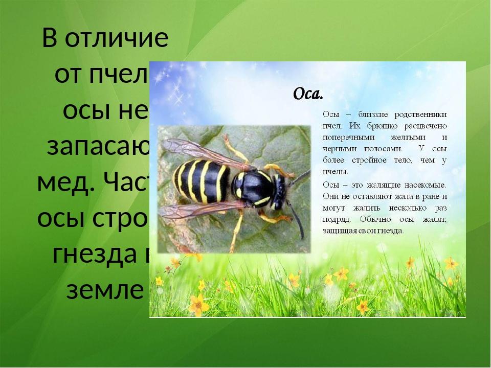 Отличия осы, пчелы и шмеля - вредители