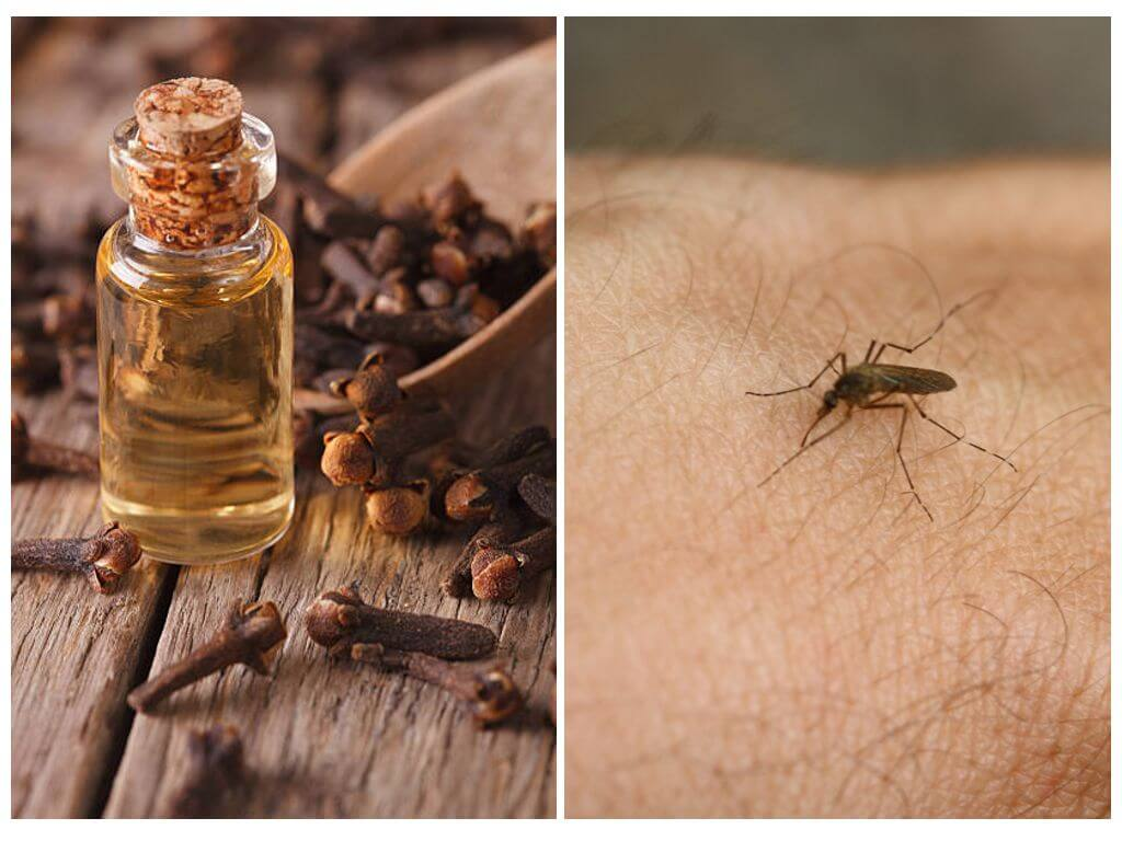 Масло гвоздики: свойства и применение эфира, помогает ли от клещей и комаров, использование для волос и лица, от прыщей, при гайморите и зубной боли