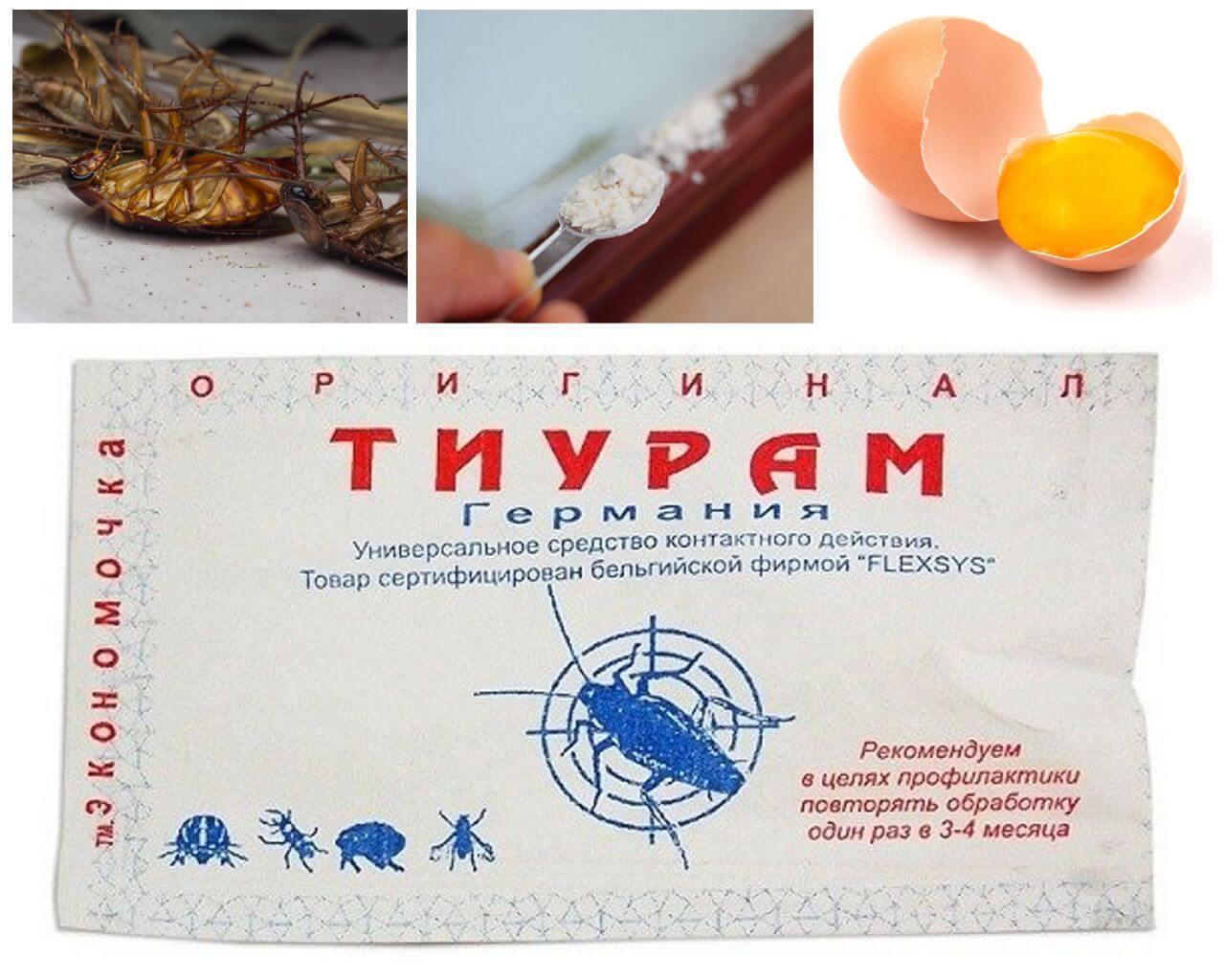 Тиурам - «старый» и «новый»: стоит ли и как применять от тараканов и других насекомых
