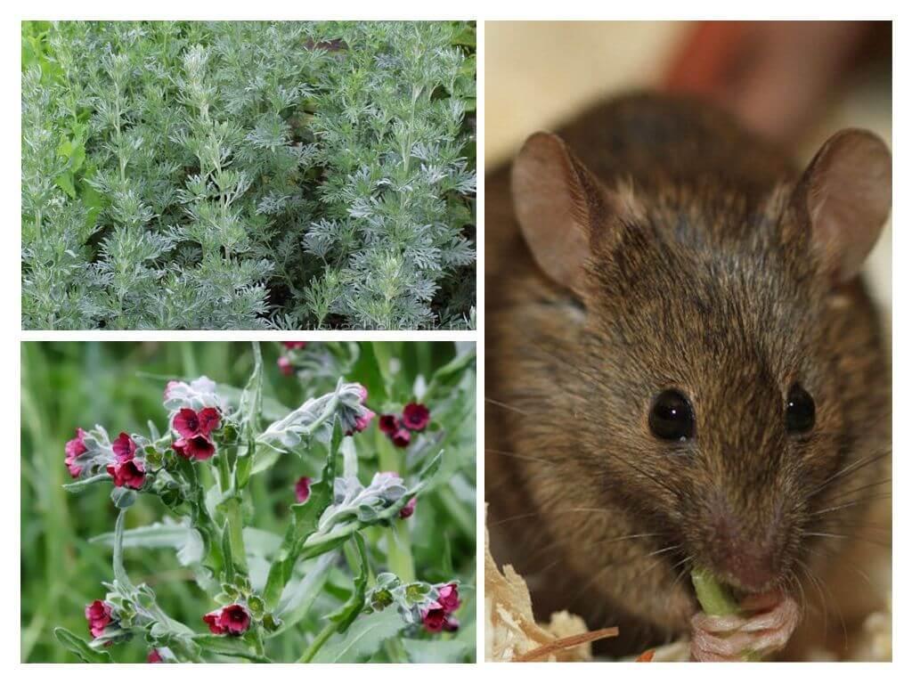 Как избавиться от мышей на даче навсегда: отпугиватели, ловушки и эффективные народные средства