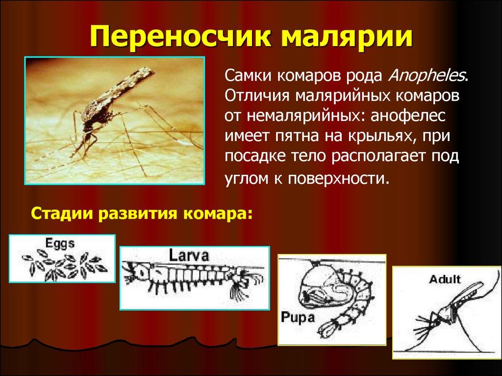 Укус малярийного комара – как распознать укус, признаки, последствия | rvdku.ru