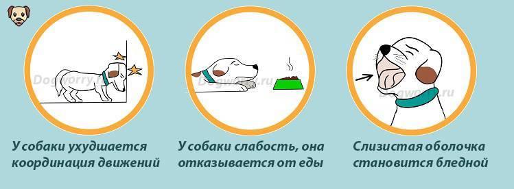 Что делать если кошка отравилась крысиным ядом