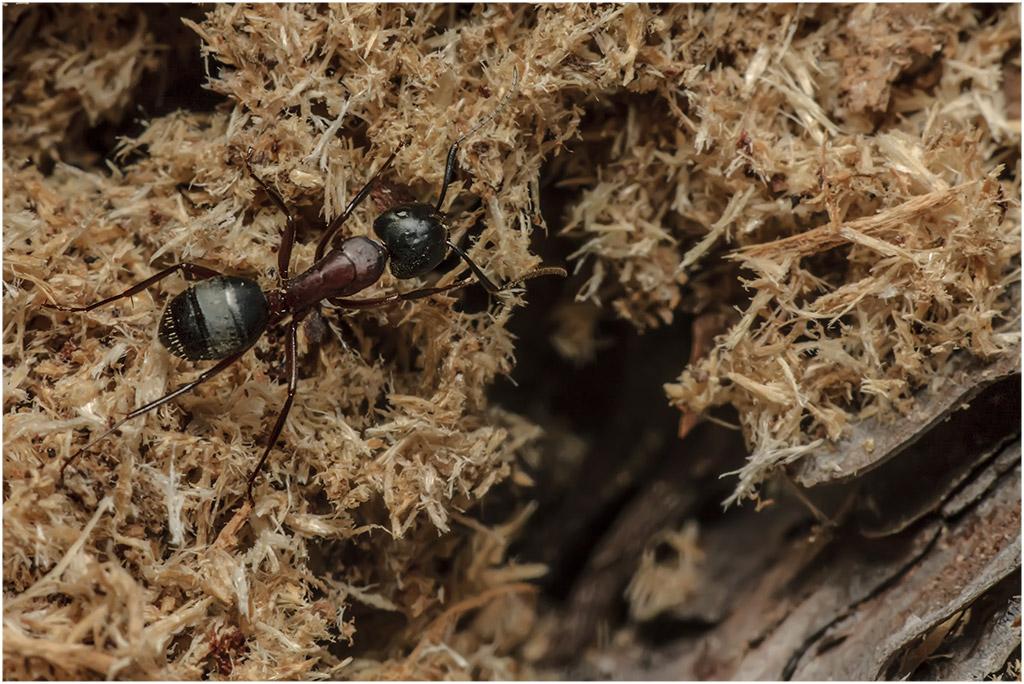 Виды муравьёв: знакомые и экзотические