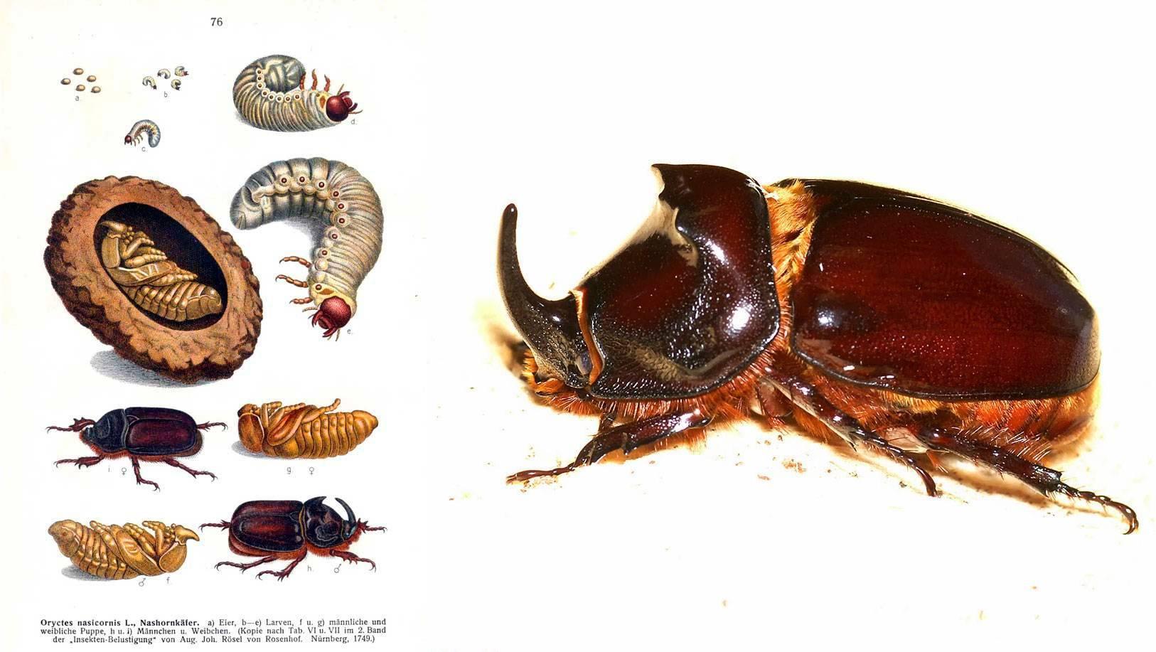 5 самых ядовитых насекомых в мире