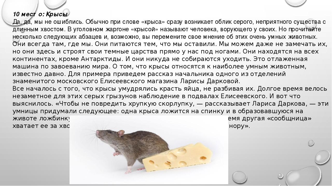 Интересные факты о крысах - хозяйках 2020 года по восточному календарю
