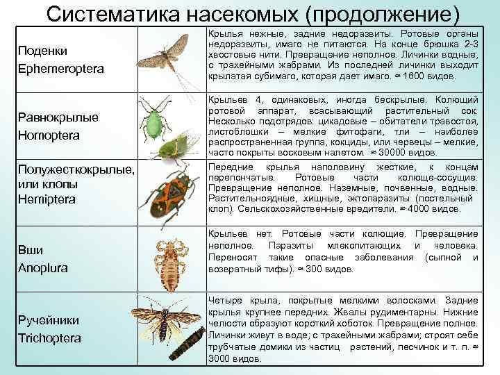 Какие бывают виды моли? капустная, тополиная, рябиновая и другие, внешний вид с фото, наносимый вред