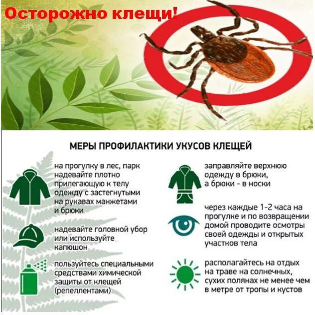 ❶ сезон активности клещей в россии – когда начинается, сколько длится и когда заканчивается?