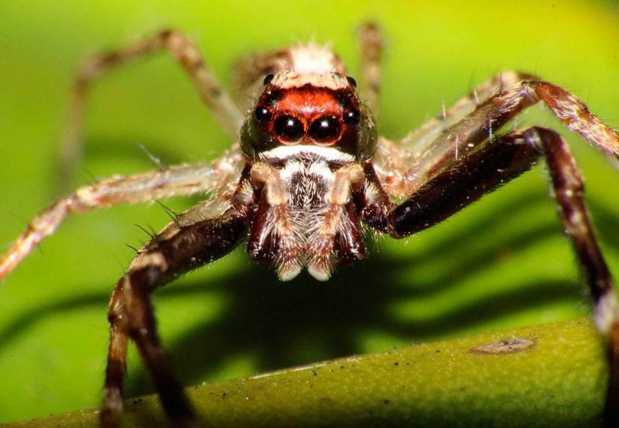 Какие виды пауков живут в квартире или доме
