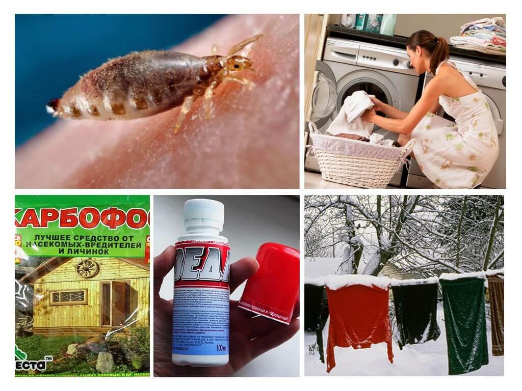 Как избавиться от бельевых вшей: 20 способов выведения в домашних условиях