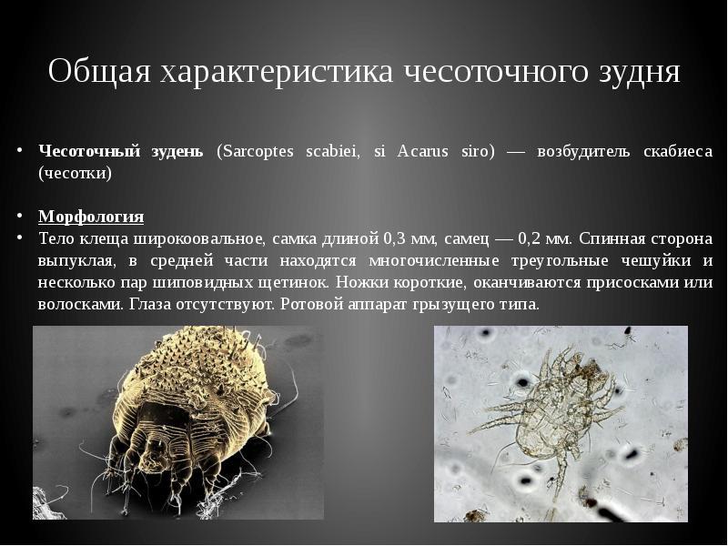 Обзор характеристик постельных клещей: что за насекомые, чем опасны, как появляются и распространяются, как быстро избавиться, фото укусов