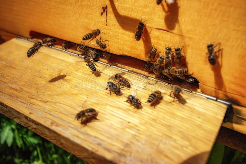 Как бороться с муравьями на пасеке