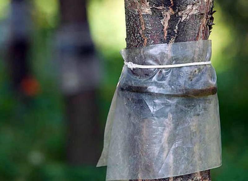 Как избавиться от муравьев и тли на деревьях: средства защиты и народные ловушки