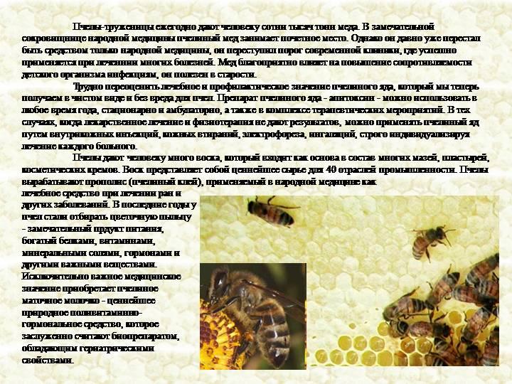 Пчелиный яд: польза и вред, лечение