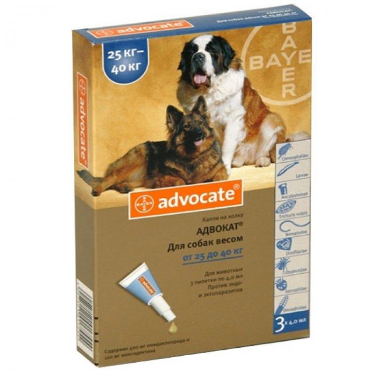 Адвокат от блох для собак и кошек: инструкция по применению, отзывы, цена